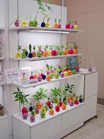 モスペット in 大丸京都店